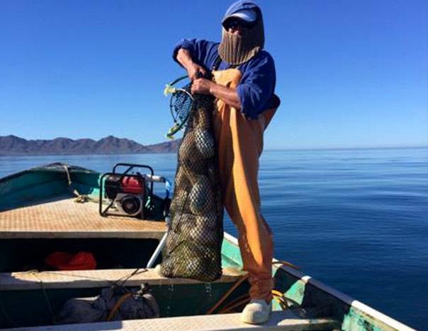 chiluda-pescador